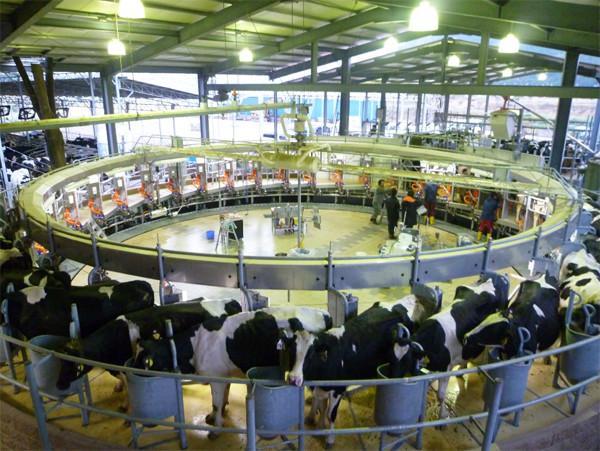 牛のパーラー写真