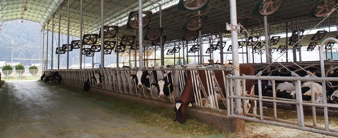 牛のおうち フリーストールの写真